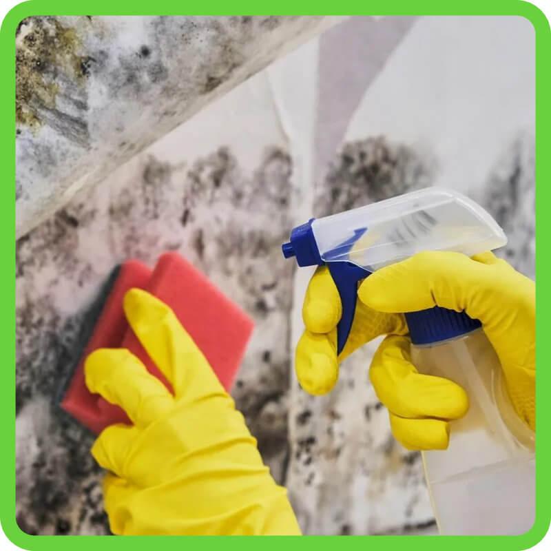 How we treat mold