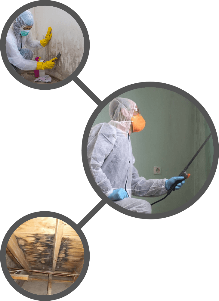 Mold Treatment Page - WHy choose us